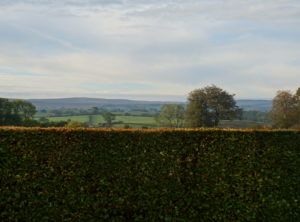 Hedge and beyond
